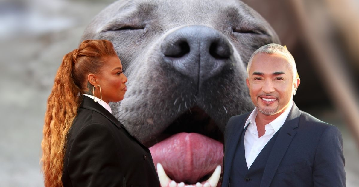 Queen Latifah's Pooch KILLED By Dog Whisperer's Out Of Control Pitbull