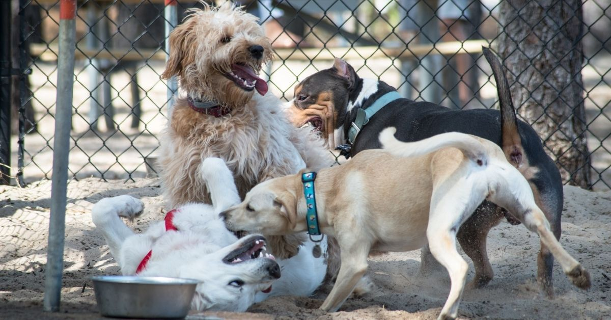 Williamsburg Dog Park Karen Apologizes To Black Couple After Getting Fired From Her Job